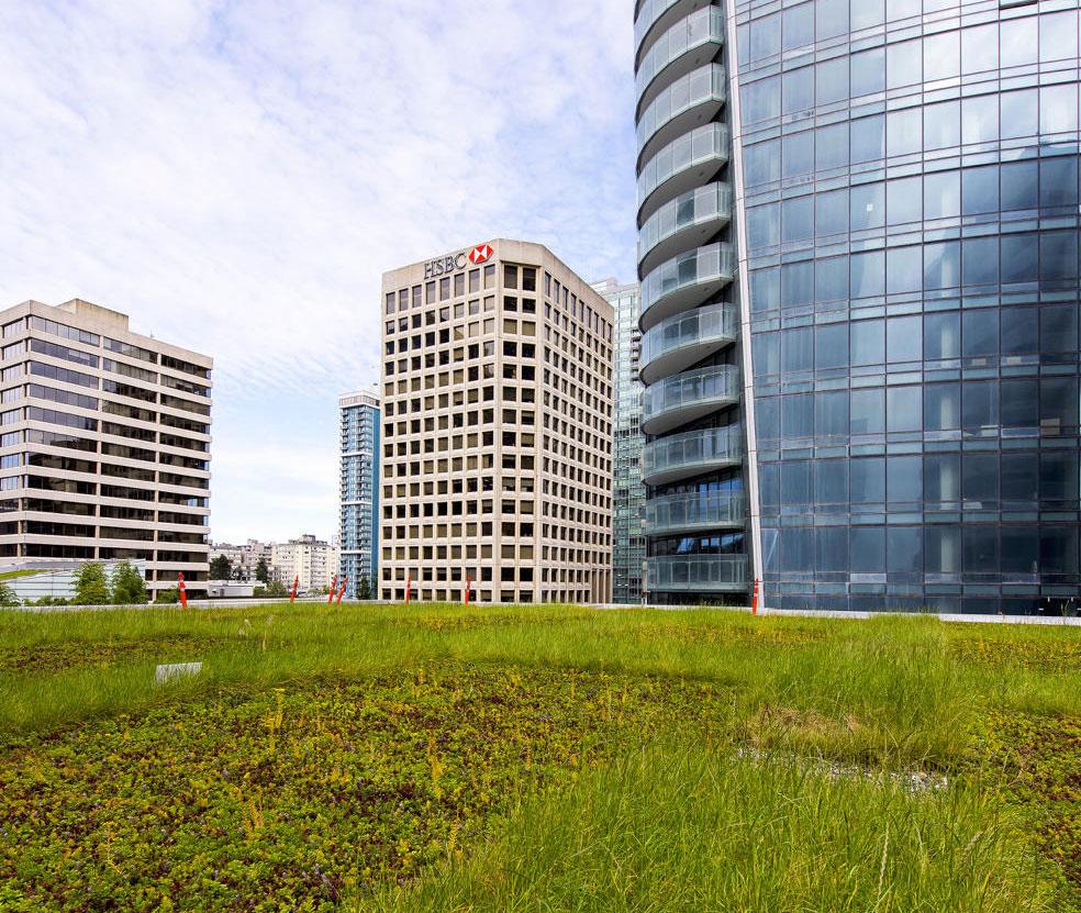 urban-heat-island-effect