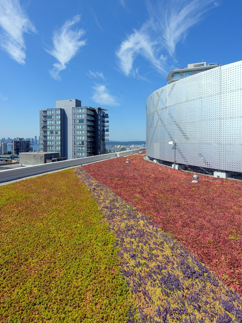 CentreView-Vancouver-Green-Roof-4