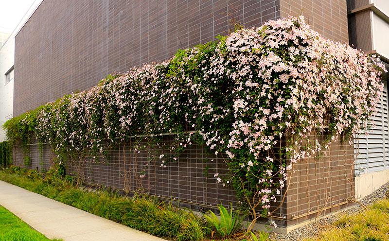 green-facade-vancouver-toronto