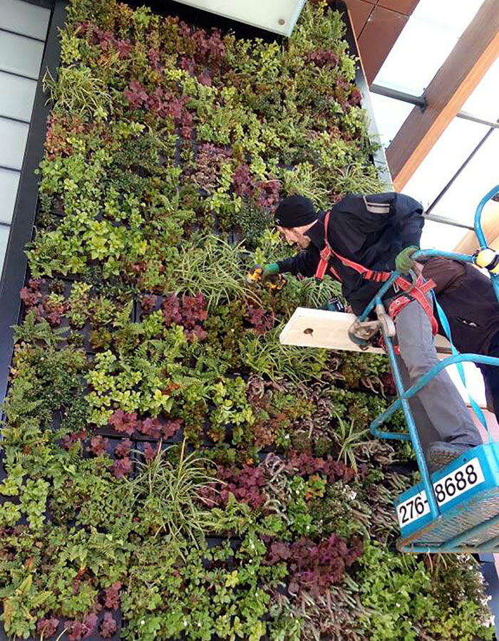 green-roof-installation-cost-2