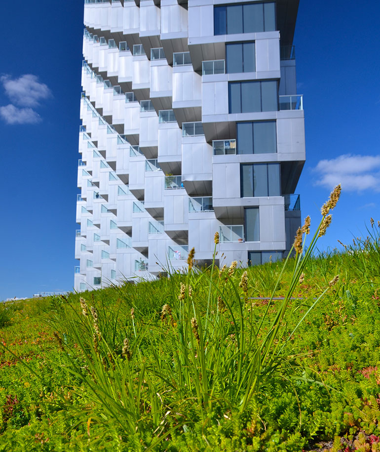 green roofs vancouver house
